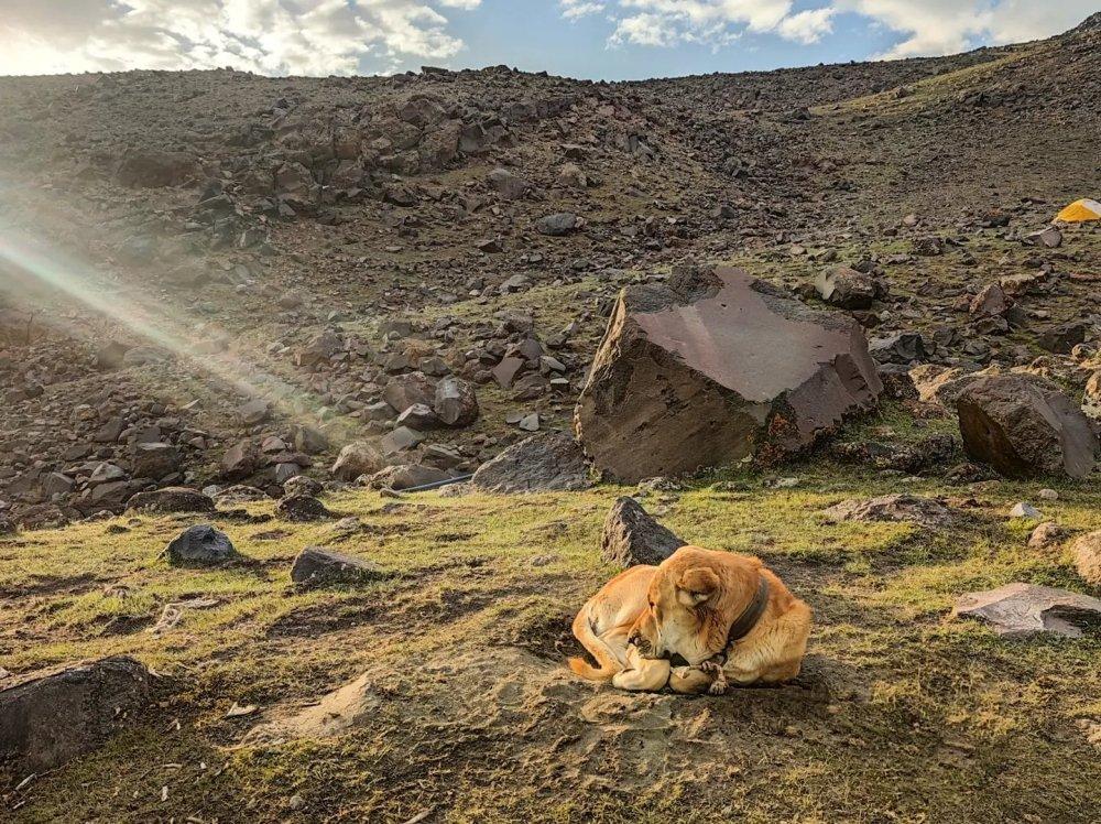 Ararat base camp dogs bear wolves